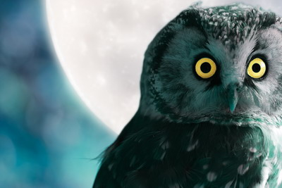 Boreal Owl at night